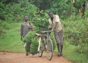 giovani-ugandesi-con-caschi-di-banane