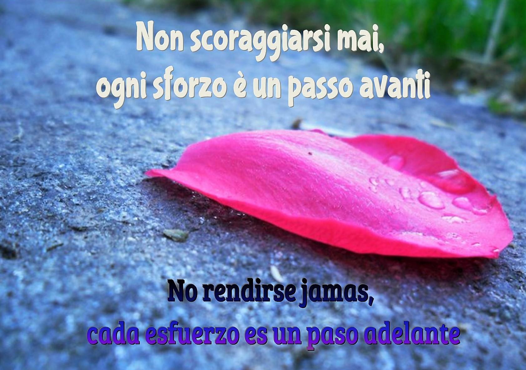 non-scoraggiarsi-no-rendirse